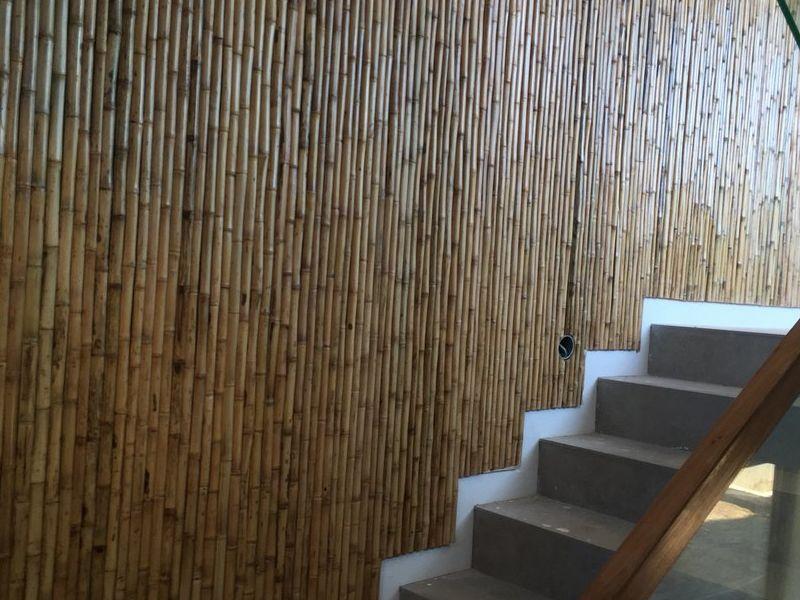 Colihue - Bambu